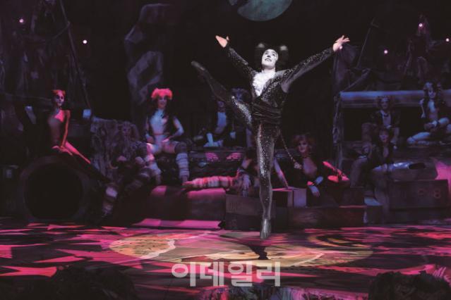 """서울 돌아온 '캣츠'…""""안전한 환경 속 ..."""