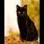 검은고양이가 내일도 단타 공..